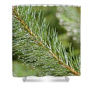 Moist Pine Tree Leaves With Water Droplets. Shower Curtain