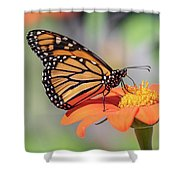 Monarch 2018-25 Shower Curtain