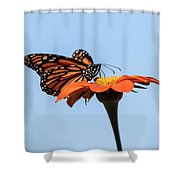 Monarch 2018-27 Shower Curtain