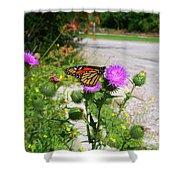 Monarch Butterfly Danaus Plexippus On A Thistle Shower Curtain