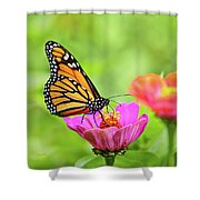 Monarch Butterfly Square Shower Curtain