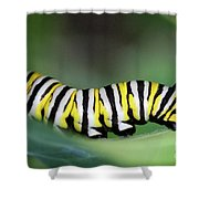 Monarch Caterpillar Macro Number 2 Shower Curtain