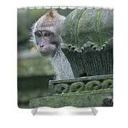 Monkey Forest Shower Curtain