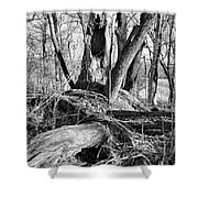 Monochrome Woods 2 Shower Curtain