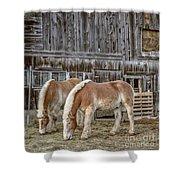 Morgan Horses By The Barn Shower Curtain