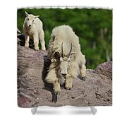 Mountain Goats- Nanny And Kid Shower Curtain