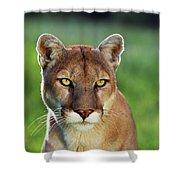 Mountain Lion Felis Concolor, Portrait Shower Curtain