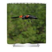 Mr. Red-winged Blackbird In-flight Shower Curtain