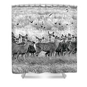 Mule Deer Black And White 01 Shower Curtain by Rob Graham