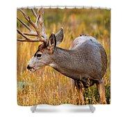 Mule Deer Buck In Rocky Mountain National Park Shower Curtain
