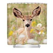 Mule Deer Fawn Lying In Wildflowers Shower Curtain
