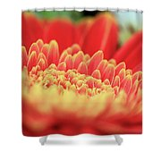 Mum Flower Shower Curtain