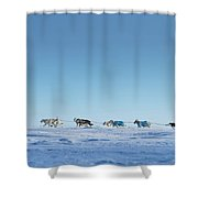 Mushing Alaska Shower Curtain