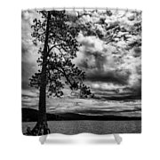 My Favorite Tree Black And White Shower Curtain