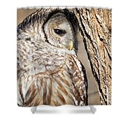 Nap Time Shower Curtain by Randy Hall
