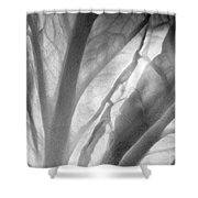 Napa Cabbage 2759 Shower Curtain