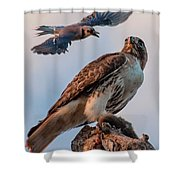 Natural Selection Shower Curtain