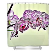 Naturalness And Flowers 37 Shower Curtain