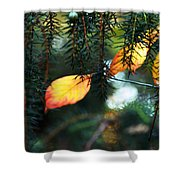 Nature's Glow Shower Curtain