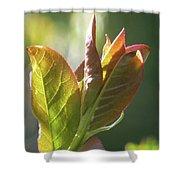 New Chokecherry Leaves Shower Curtain