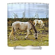 New Forest Ponies On The Heath Shower Curtain