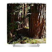 New Growth Redwoods Shower Curtain
