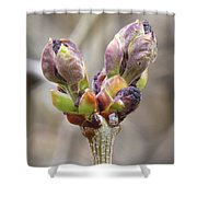New Life In The Lilacs Shower Curtain