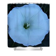 New Mexico Flower Shower Curtain