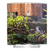 Night Heron At The Palace Shower Curtain by Kate Brown