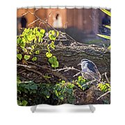 Night Heron At The Palace Revisited Shower Curtain by Kate Brown
