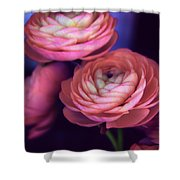 Ranunculus Trio Shower Curtain