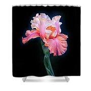 Bearded Iris Shower Curtain