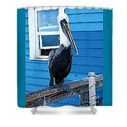 Oceanside Pelican Right  Shower Curtain
