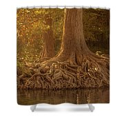 Old Cypress Tree Roots Shower Curtain