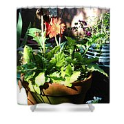 Old Pots New Blooms Shower Curtain