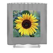 One Bright Sunflower Shower Curtain