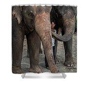 One Man, Two Elephants Shower Curtain