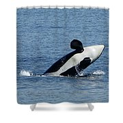 One Orca Leaping Shower Curtain