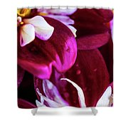 One Strand Shower Curtain