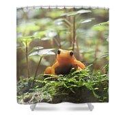 Orange Frog. Shower Curtain