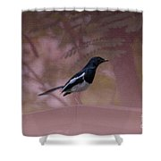 Oriental Magpie-robin With Texture Shower Curtain
