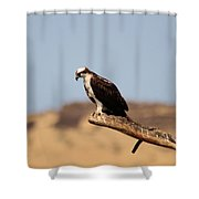 Osprey Waiting For Fish Shower Curtain