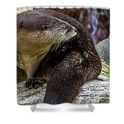 Otter Interrupted Shower Curtain by Kate Brown