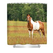 Paint Horse In Meadow Shower Curtain