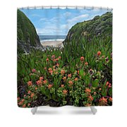 Paintbrush And Ice Plant, Garrapata Shower Curtain