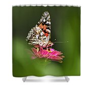 Painted Lady Butterfly At Rest Shower Curtain