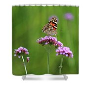 Painted Lady Butterfly Beauty Shower Curtain