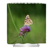 Painted Lady Butterfly In Shadows Shower Curtain