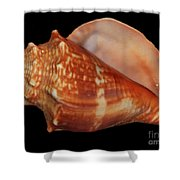 Painted Shell No. 9 Shower Curtain