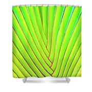Palms And Fronds - Hawaii Shower Curtain